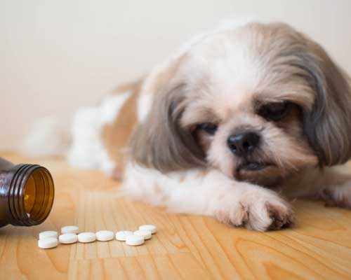 taking-your-dogs-medication